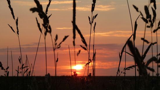 Sonnenuntergang in den Dühnen